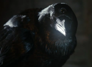 Three-eyed_raven[1]
